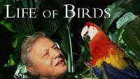 The Life of Birds - Meat-Eaters