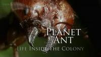 Planet Ant - Life Inside The Colony