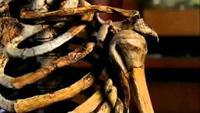 Neanderthals: Human Extinction