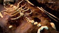 Vampire Skeletons Mystery