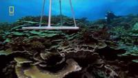 Pacific Ocean Paradise