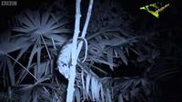 The Dark: Natures Nighttime World: Central American Jungle
