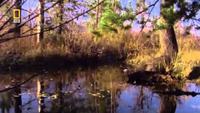 Nature's Engineers: Dam Beavers