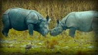Lost Worlds: On the Track of the Unicorn: Indian Rhinoceros
