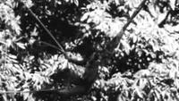 African Pygmy Thrills (circa 1930)