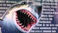 Great White Shark: Hunter And Hunted