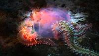 Vicious Beauties - The Secret World Of The Jelly Fish