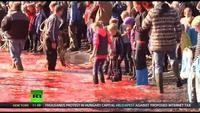 Red Waters: Faroe Islands Whale Slaughter