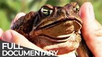 Poisonous Cane Toads: Australia's Lost Eden