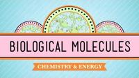 Crash Course - Biology - Biological Molecules - You Are What You Eat