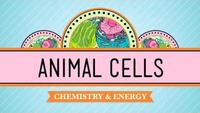 Crash Course - Biology - Eukaryopolis - The City of Animal Cells