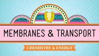 Crash Course - Biology - In Da Club - Membranes and Transport
