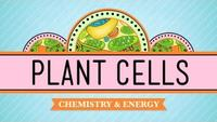 Crash Course - Biology - Plant Cells