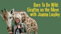 Born to Be Wild - Giraffes on the Move with Joanna Lumley