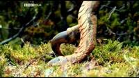 Europe - A Natural History - Genesis