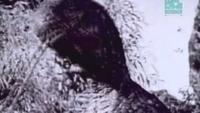 Paleoworld - Mistaken Identity