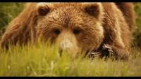 Natural World - Grizzlies Of Alaska