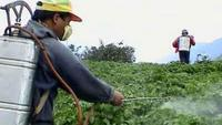 Dangers of Pesticides, Food Additives
